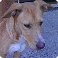 Adopt A Pet :: Tundra - Justin, TX