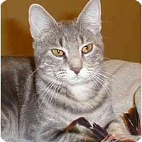 Adopt A Pet :: Humphrey (*video!*) - Portland, OR