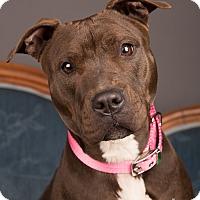 Adopt A Pet :: Jade - Eugene, OR
