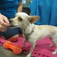 Adopt A Pet :: She-Ra - Fresno, CA