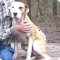 Adopt A Pet :: Guy - Little River, SC