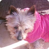 Adopt A Pet :: Tansi - Raleigh, NC