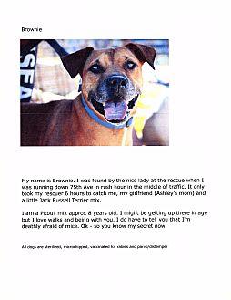 Pit Bull Terrier Mix Dog for adoption in Phoenix, Arizona - Brownie
