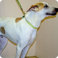 Adopt A Pet :: Venus - Cottonwood, AZ