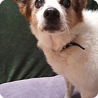 Adopt A Pet :: Honey - Taylorsville, UT