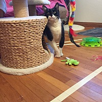 Adopt A Pet :: Midnight - Orange, CA