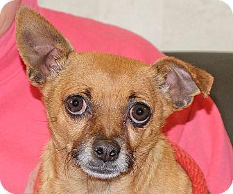 Chihuahua Mix Dog for adoption in Spokane, Washington - Peanut 2