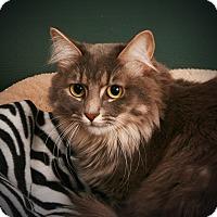 Adopt A Pet :: Dinah - Toms River, NJ