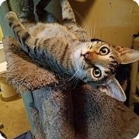 Adopt A Pet :: Crispin - Walla Walla, WA
