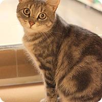 Adopt A Pet :: Maddie - Carlisle, PA