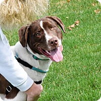Adopt A Pet :: Uno - Meridian, ID
