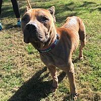Adopt A Pet :: Leo - Knoxville, TN