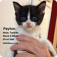 Adopt A Pet :: Payton - Temecula, CA