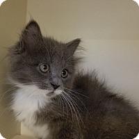 Adopt A Pet :: Cassidy - Elyria, OH