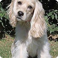 Adopt A Pet :: Kerrie - Sugarland, TX