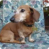 Adopt A Pet :: Hooper #2205 - San Jose, CA