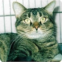 Adopt A Pet :: Hershey - Medway, MA