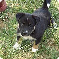 Adopt A Pet :: London - Phoenix, AZ