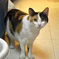 Adopt A Pet :: Pecan - Milwaukee, WI