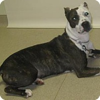 Adopt A Pet :: Blanca - Gary, IN