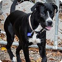 Adopt A Pet :: Daisy - Perryville, MO