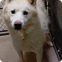 Adopt A Pet :: Pepper - Zanesville, OH