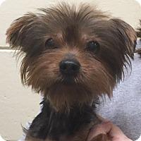 Adopt A Pet :: Rosie - geneva, FL