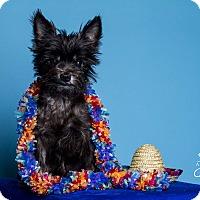 Adopt A Pet :: Nemo - Baton Rouge, LA