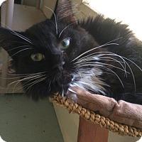Adopt A Pet :: Max - Horseshoe Bay, TX