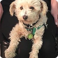 Adopt A Pet :: Fredo - Thousand Oaks, CA
