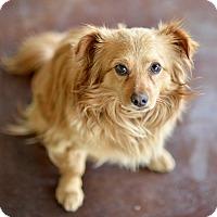 Adopt A Pet :: Bubba - San Antonio, TX