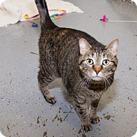 Adopt A Pet :: Rain - Martinsville, IN