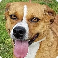 Adopt A Pet :: Ruby - Lexington, KY