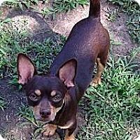 Adopt A Pet :: Willis - North Little Rock, AR