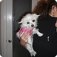Adopt A Pet :: Buttons - Rescue, CA