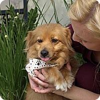 Adopt A Pet :: Patty - Mission Viejo, CA