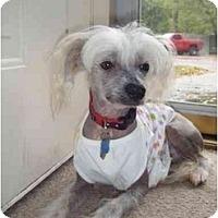 Adopt A Pet :: Buddy - Gilford, NH