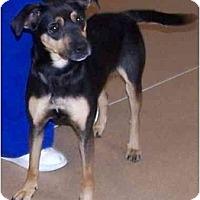 Adopt A Pet :: Lady - Toronto/Etobicoke/GTA, ON