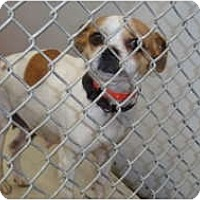 Adopt A Pet :: Sweetie - Mission Viejo, CA