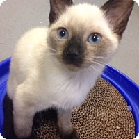 Adopt A Pet :: Lilac - Long Beach, NY