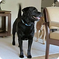 Adopt A Pet :: Jake - Chattanooga, TN