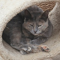 Adopt A Pet :: LITTLE MARIA - San Pablo, CA