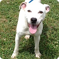 Adopt A Pet :: CHASE - Leland, MS