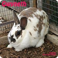 Adopt A Pet :: Gwyneth - Santa Maria, CA