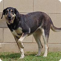 Adopt A Pet :: Lady - Lufkin, TX