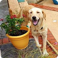 Adopt A Pet :: Chance - Flower Mound, TX