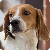 Adopt A Pet :: Jackson-adoption pending - Burlington, NC