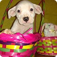 Adopt A Pet :: Lucy - Cincinnati, OH