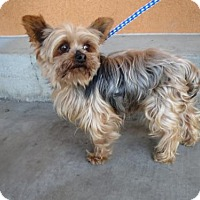 Adopt A Pet :: Angel#4 - Moreno Valley, CA