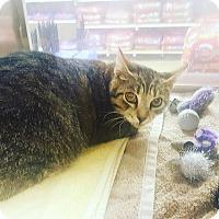 Adopt A Pet :: Shylee - Baltimore, MD